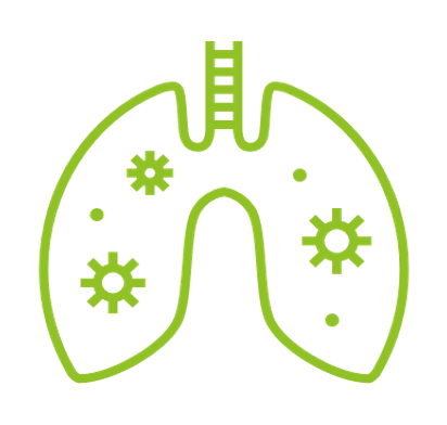 An illustration of lungs
